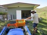 Monteverde Olives Queensland with fresh harvested fruit