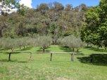 Monteverde Olives Queensland Grove
