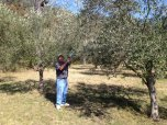 Assessing the trees at Monteverde Olives Queensland